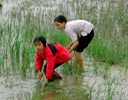 two girls in rice field